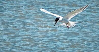 Fast Terns