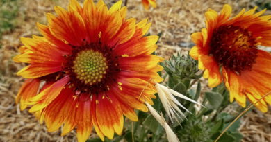 Late Summer Bloomers