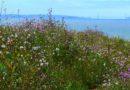 Wild Radish 5/13/2012