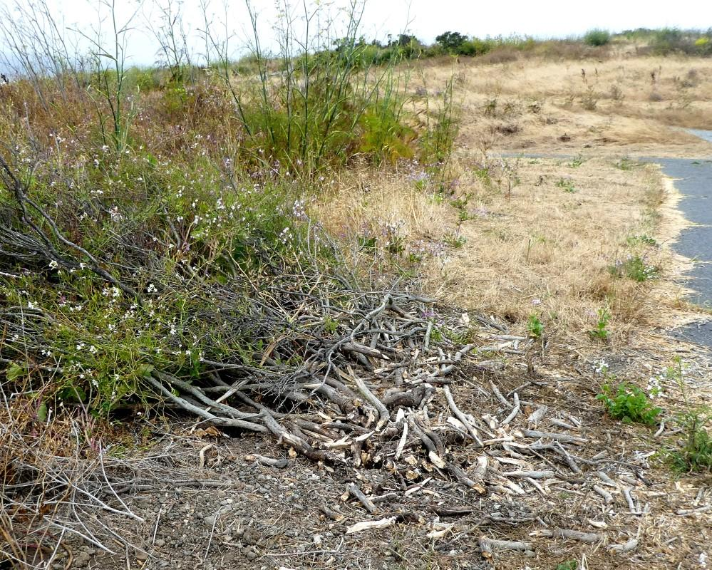 Was trashing this bush really necessary?