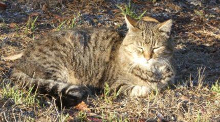 Feral Cat in Cesar Chavez Park