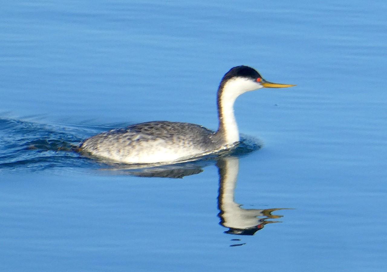 A Birdy Thursday Afternoon