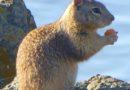 Ground Squirrel with Contraband 1/11/2013