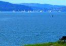 Watching the Sailboat Races out of Sausalito 1/13/2013