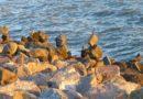 Boys, Rocks, Water